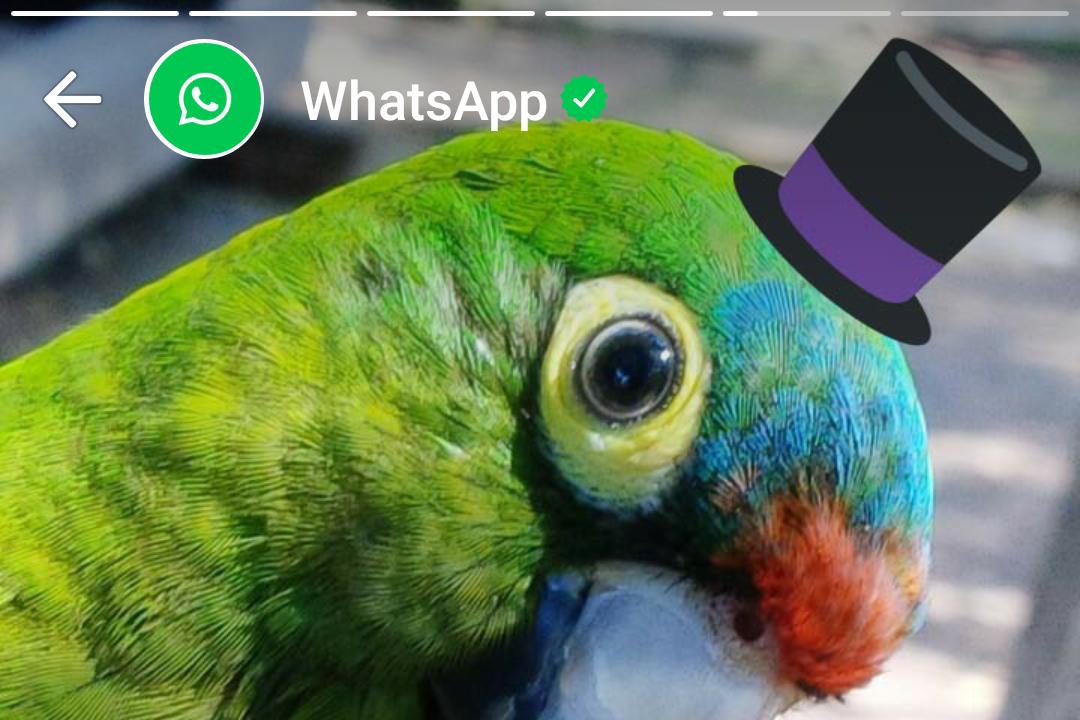 В WhatsApp появятся «истории» из Instagram