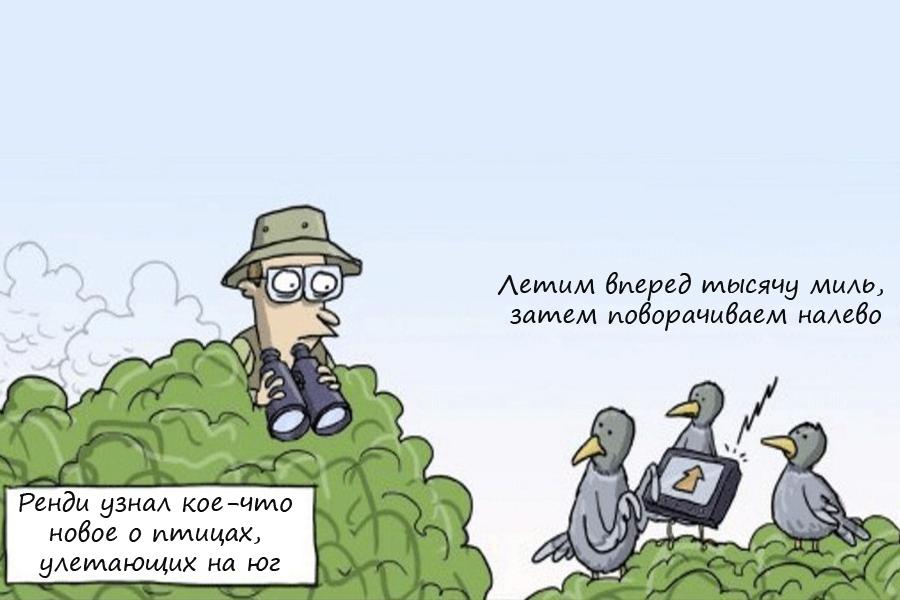 Птичий долг за мобильную связь чуть не разорил российских орнитологов